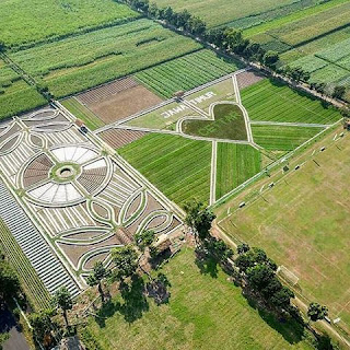 crop circle di Kediri