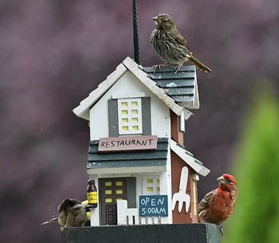 Photo of birds at bird feeder. Veronica Andrews from Pixabay.