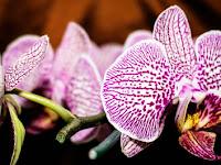Penemuan Bunga Anggrek Langka Di Goa Baru Pangandaran