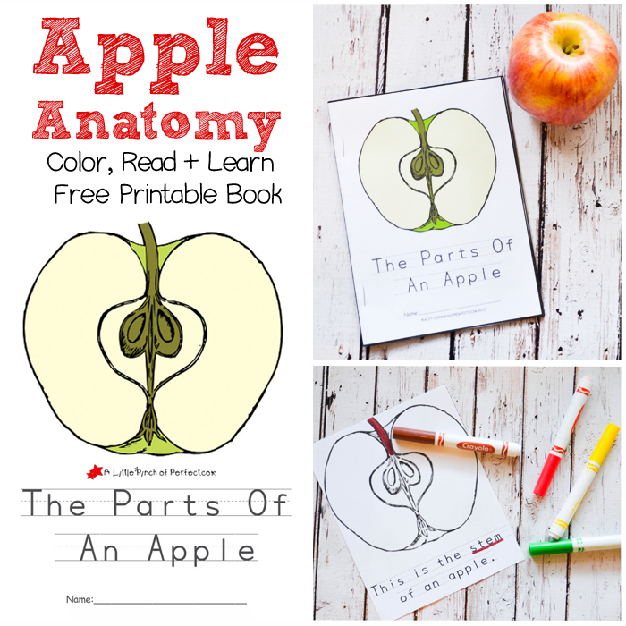 The Parts Of An Apple Color, Read, and Learn Free Printable