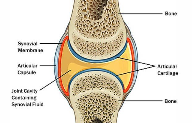 Joint Anatomy - Causes of Stiff Joints and How to Find Relief