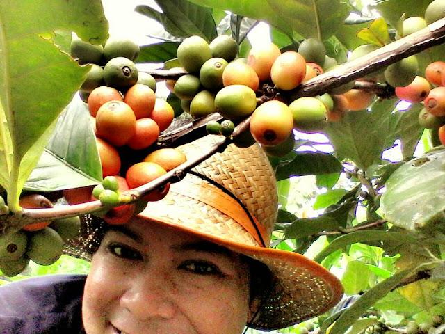 The Koppi: Kopi Organik Hasil Tempatan Yang Berbeza dan UNIK