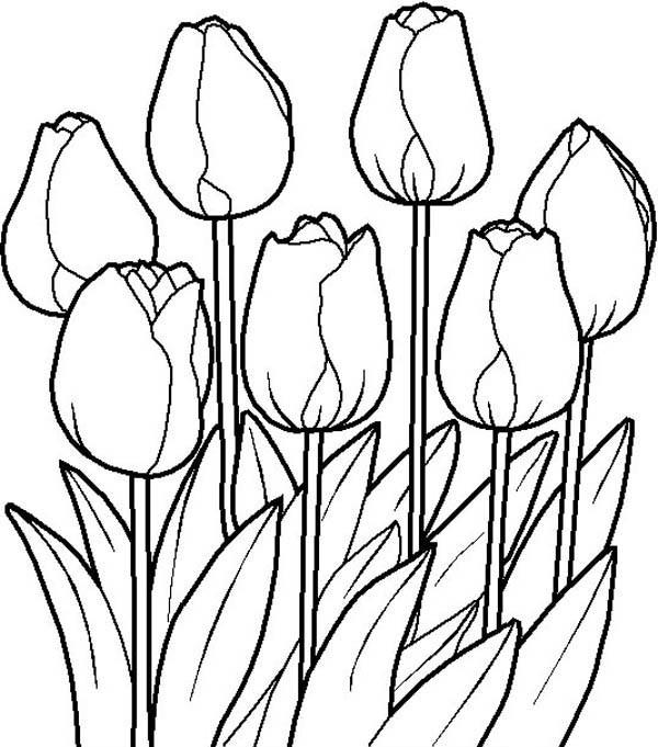 Mewarnai gambar bunga tulip yang indah dan cantik for Mural hitam putih
