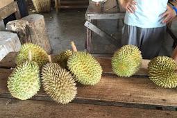 Durian Buffet in Balik Pulau