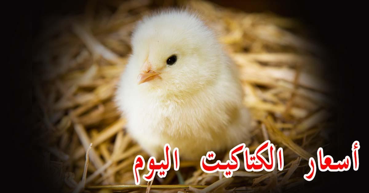 سعر الكتكوت الابيض اليوم في مصر