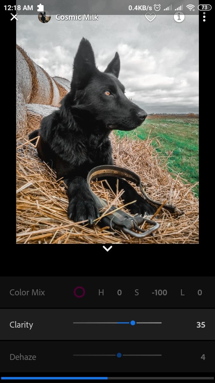 Dog Lightroom edit
