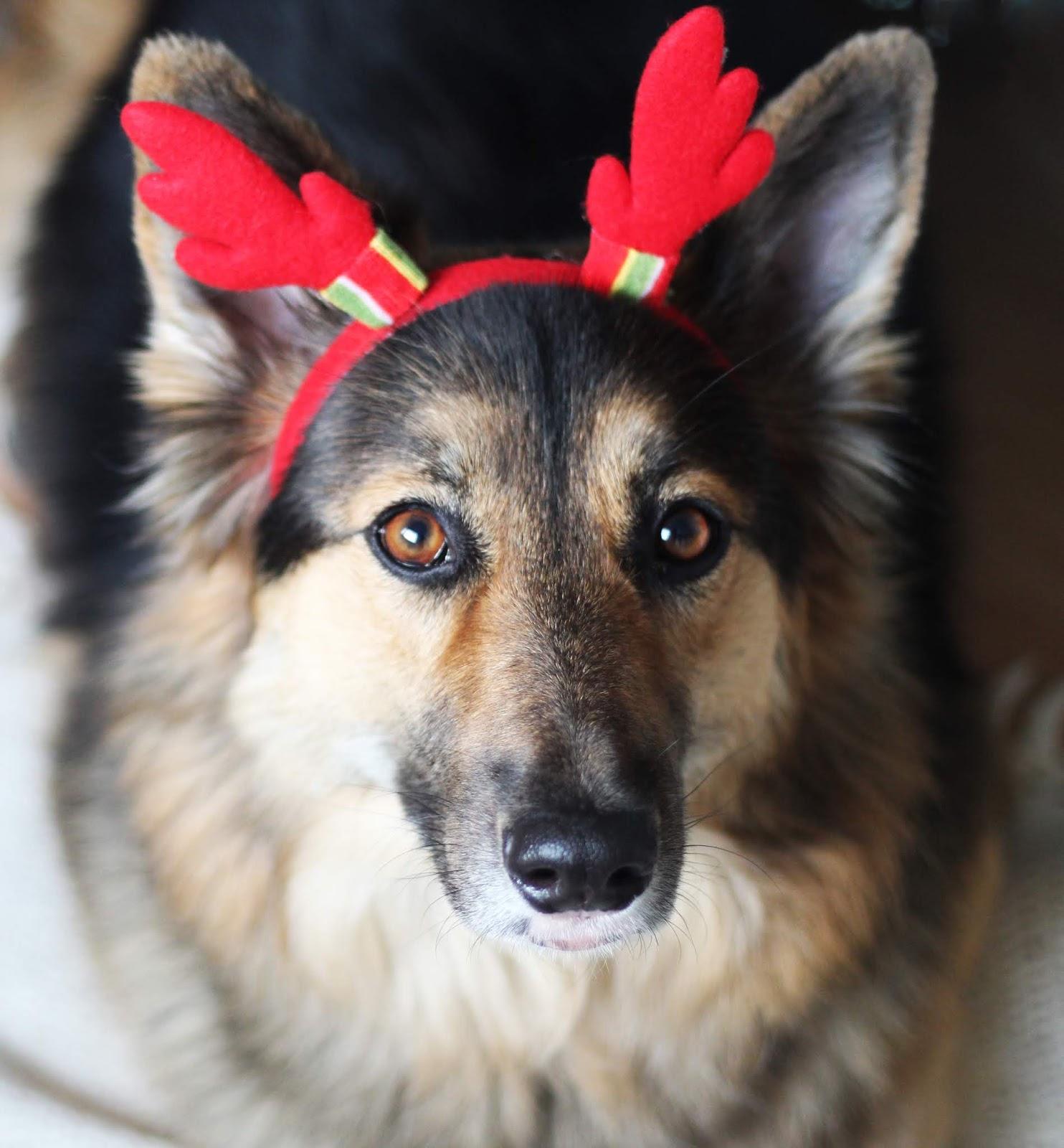 Czy możemy dostać prezent od...psa?
