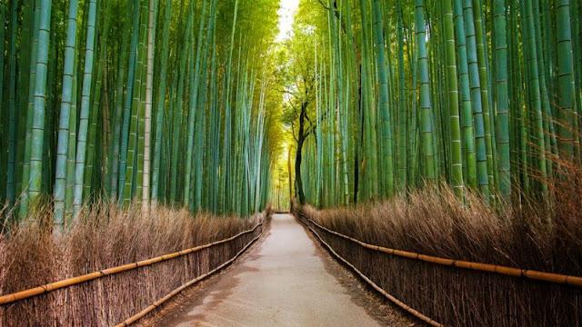 terowongan bambu sagano