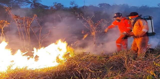 Concluye temporada sin un solo incendio forestal en todo el territorio: Procivy