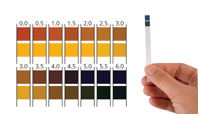 ph level test strips for kombucha