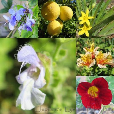December garden flowers