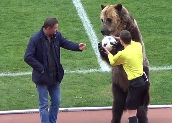 Urso é usado para entregar bola a juiz na 3ª divisão russa e pode aparecer na Copa