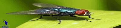 طارد الناموس والبعوض والذباب , مكافحة الحشرات الطائرة