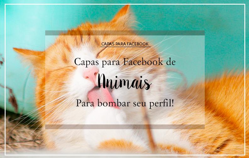 A imagem mostra um pequeno gatinho laranja, lambendo as patas de olhos fechados