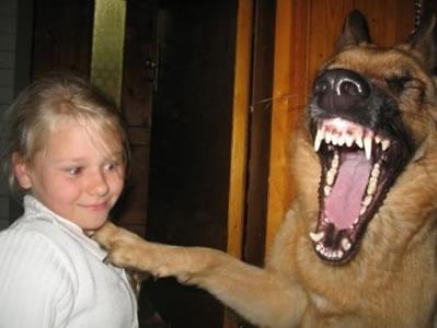 Apakah anjing memiliki rasa humor