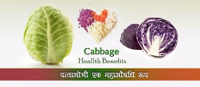 Cabbage-Benefits-in-Hindi, Patta-Gobhi-Se-Fayde, पत्ता-गोभी-के-फायदे-और-नुकसान, पत्ता-गोभी - फायदे, Cabbage-Benefits, patta-gobhi