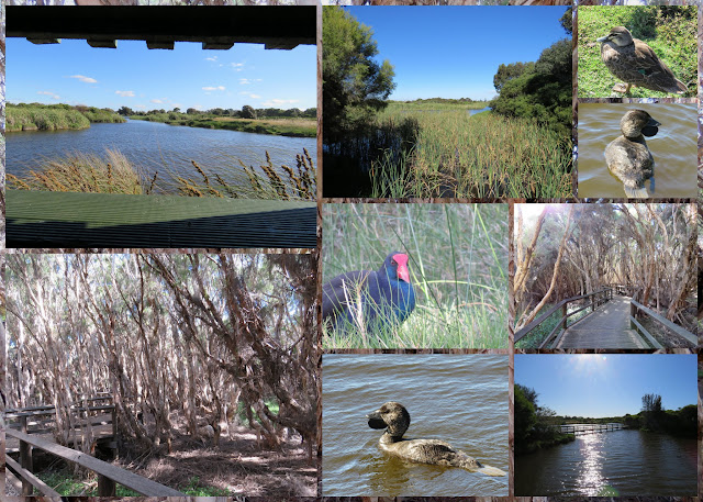 Big Swamp Parkland: A great pitstop on a Perth to Margaret River road trip