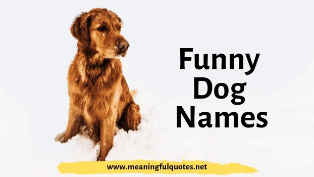 funny dog names