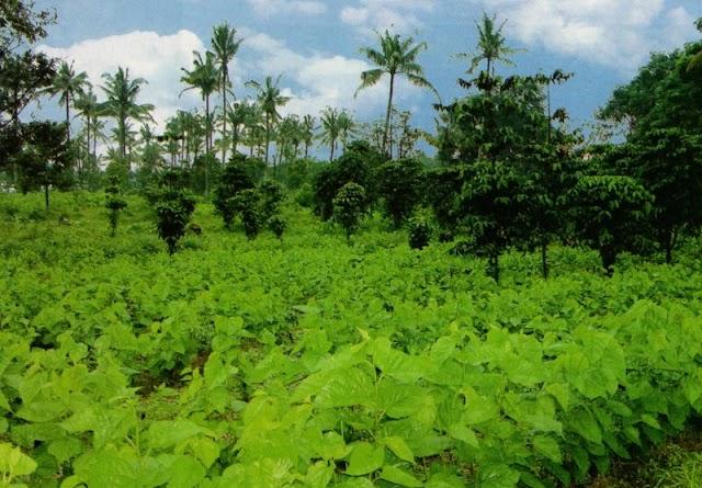 Kebutuhan Pasar Yang Cukup Tinggi, Budidaya Ulat Sutra Tanah Air Semakin Digenjot