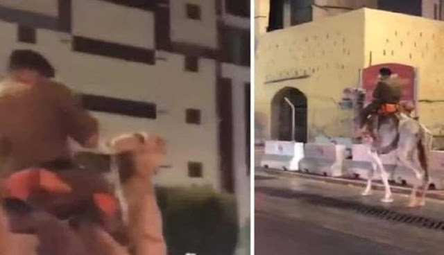 Video : Saudi Police arrested a Man in Makkah on riding a Camel on the Road