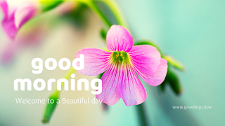 good Morning greetings with Natural Wild Flowers