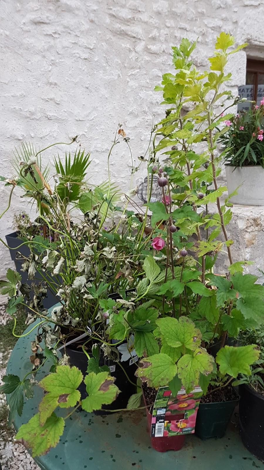 le jardin de v rone new envie d 39 anemones au jardin. Black Bedroom Furniture Sets. Home Design Ideas