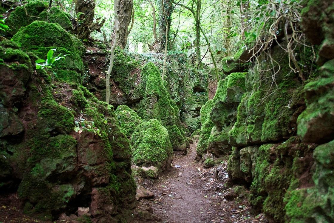 Bosque de Dean. Gloucestershire. Inglaterra.