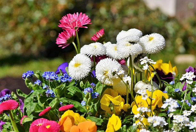 hinh anh hoa cuc dep