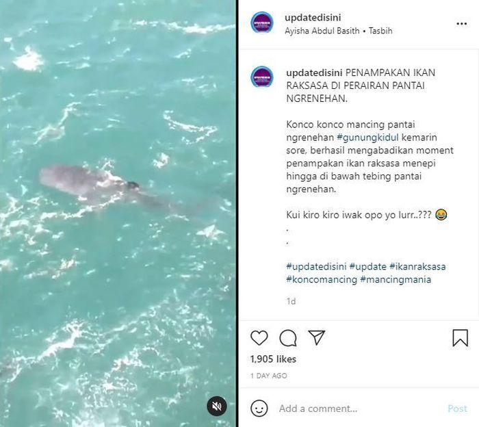 Ikan raksasa di perairan pantai Ngrenehan, Gunung Kidul. Tangkap layar Instagram @updatedisini