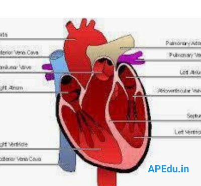 What should be done to keep the heart healthy ..?