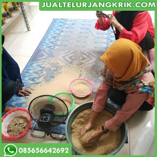 Jual Telur Jangkrik Tangerang