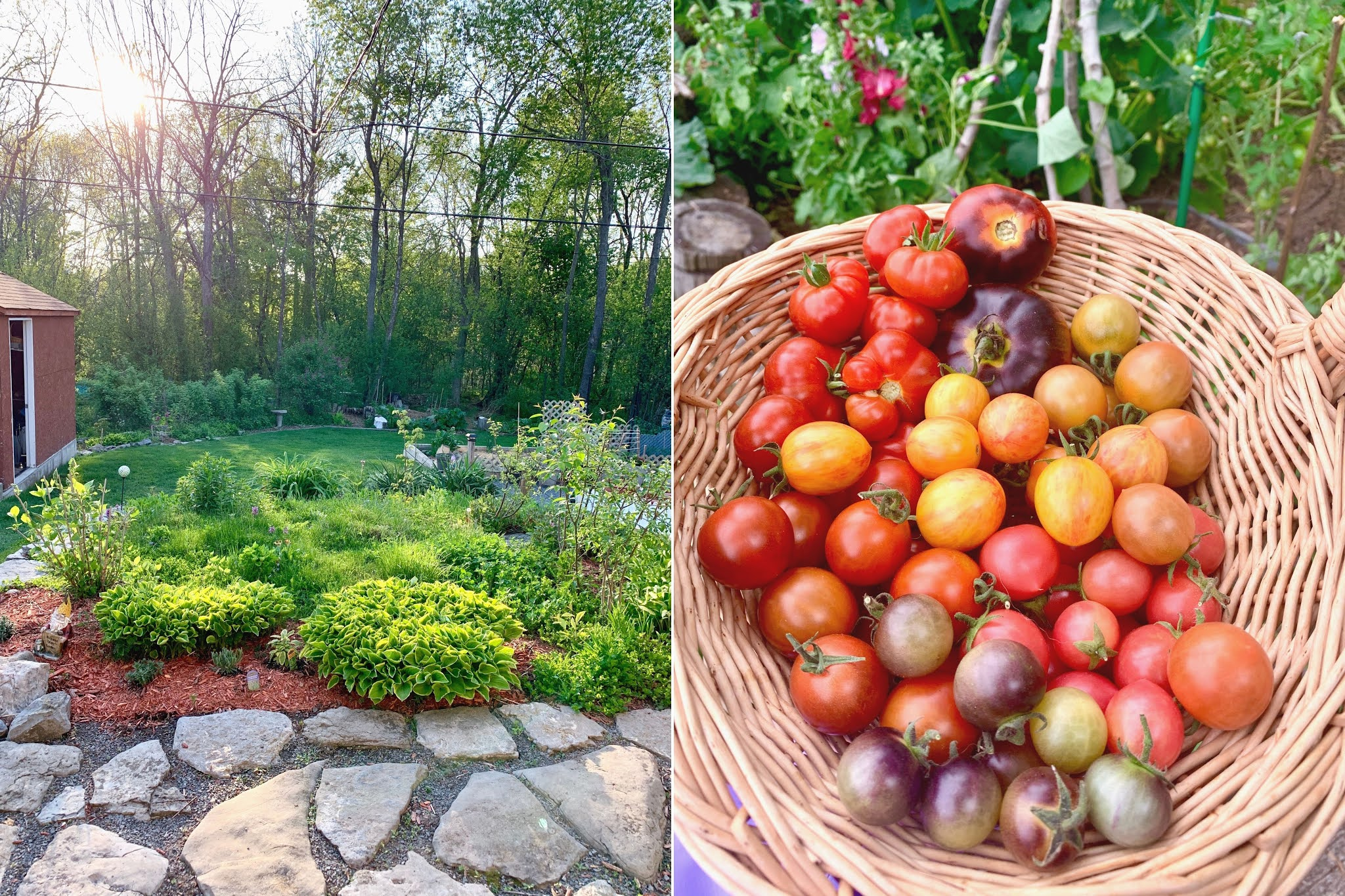Backyard zen zone with tall trees and garden fresh tomatoes