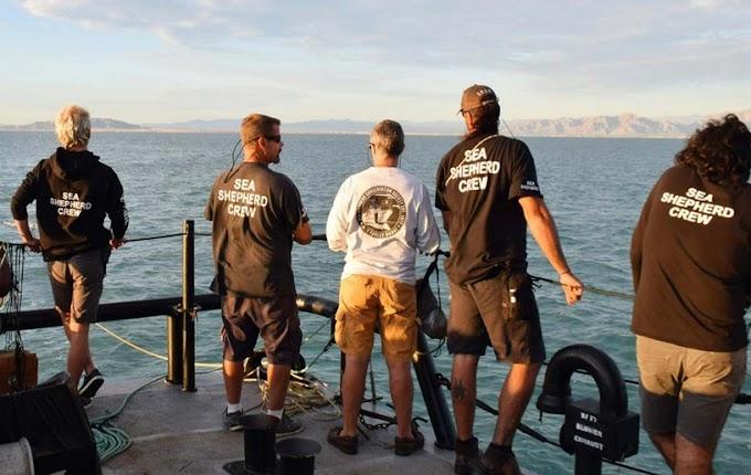 ¡Autorizan regreso de ecologistas gringos al Golfo de California!