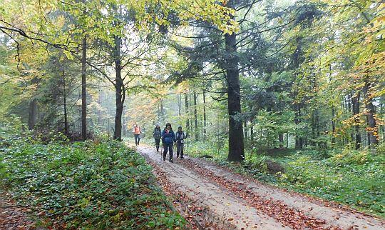 Las staje się czytelniejszy, a droga przejrzysta.