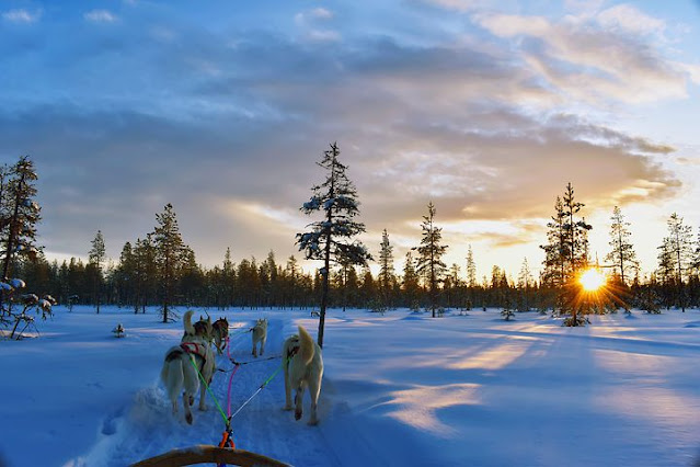 What is healthy eating for young and adult husky, foods to avoid for Siberian huskies