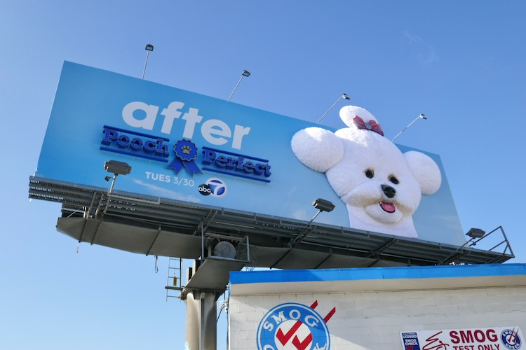 Pooch Perfect After 3D billboard installation