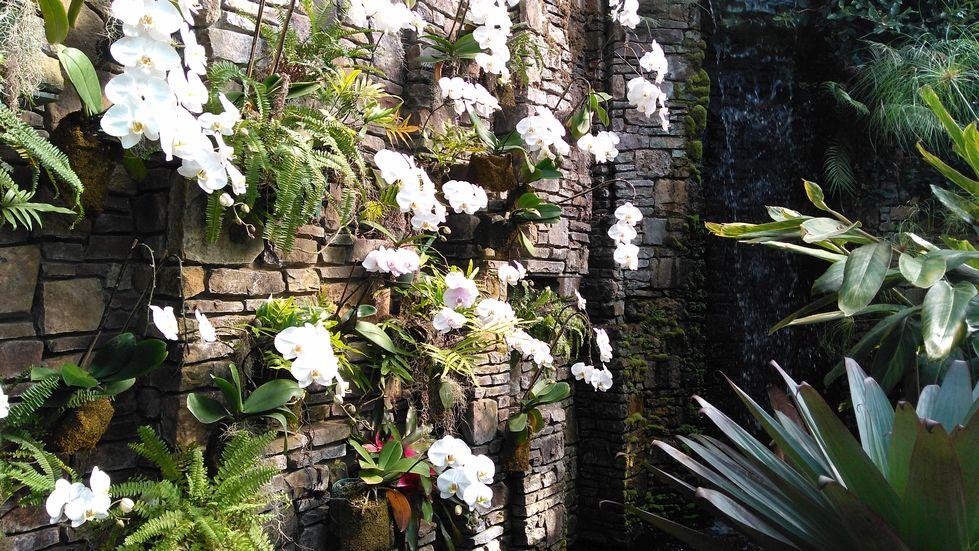 Ruhs 39 News North Carolina Daniel Stowe Botanical Garden