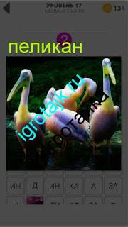 несколько пеликанов в стаю собрались 17 уровень 400 плюс слов 2