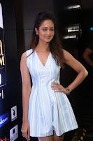 Shanvi Looks super cute in Small Mini Dress at IIFA Utsavam Awards press meet 27th March 2017 103.JPG