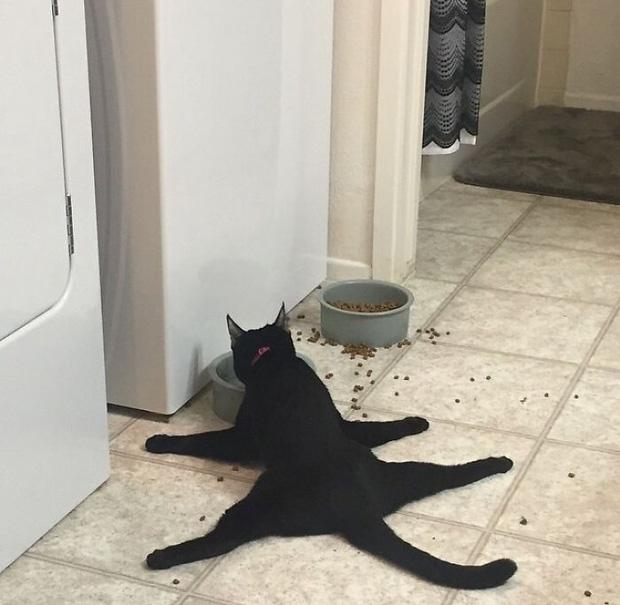 """16 con mèo """"té giếng"""" cần được trả đĩa bay để rời khỏi Trái Đất ngay lập tức"""