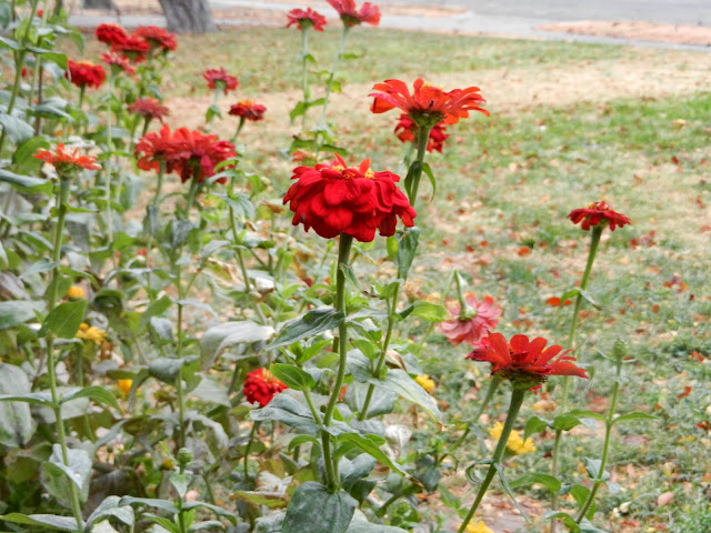 autumn red flowers