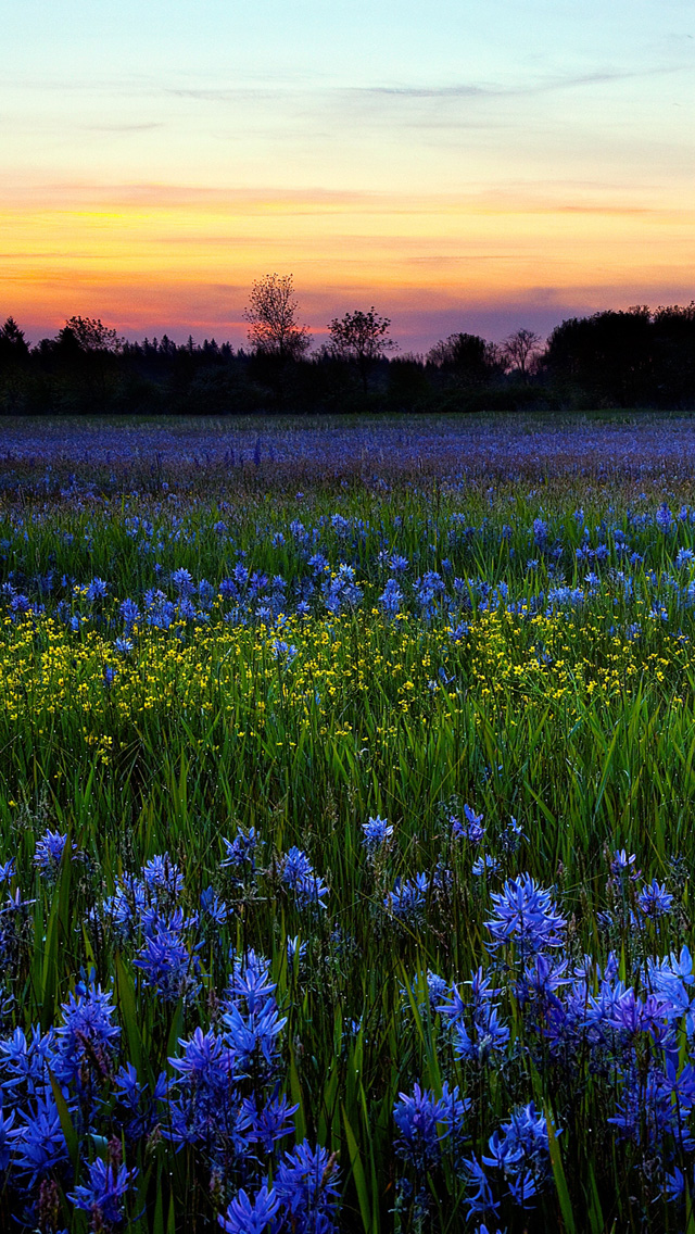 Free Download Spring Sunset iPhone 5 HD Wallpapers | Free ...