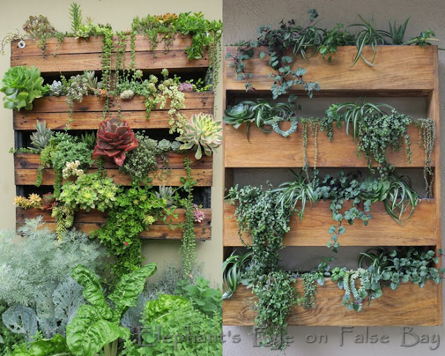 Recycled pallet planters by Small Space Gardens