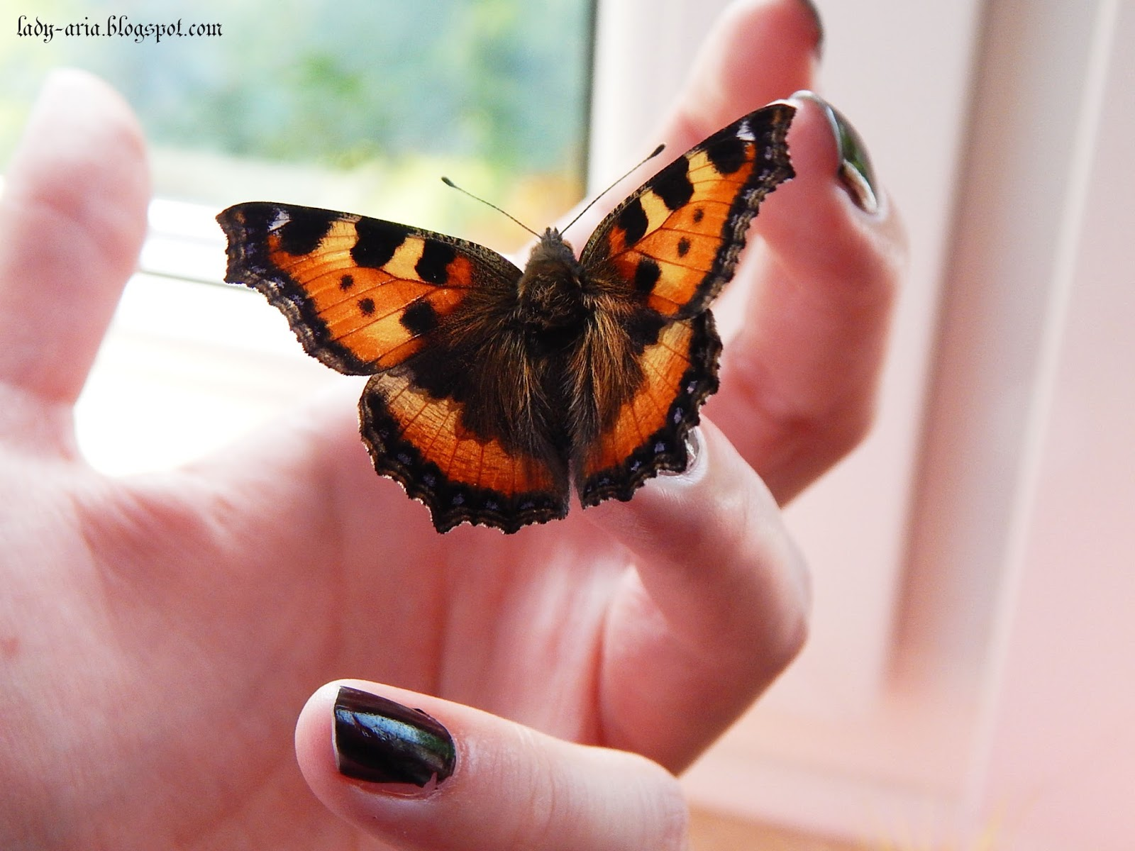 ~122 Motylem jestem...