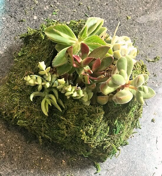 Moss covered succulent planter pocket
