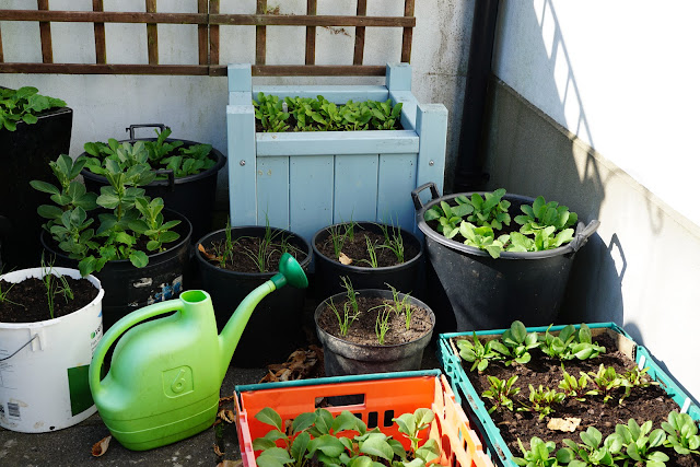 allotment patio with pots full of goodies- a stubborn optimist blog - C. Gault 2020