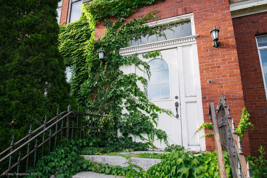 Portland, Maine USA July 2016 photo by Corey Templeton of vine covered door entrance at 749 Congress Street.