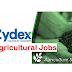 Sales Executive Officer-Agricultural Job