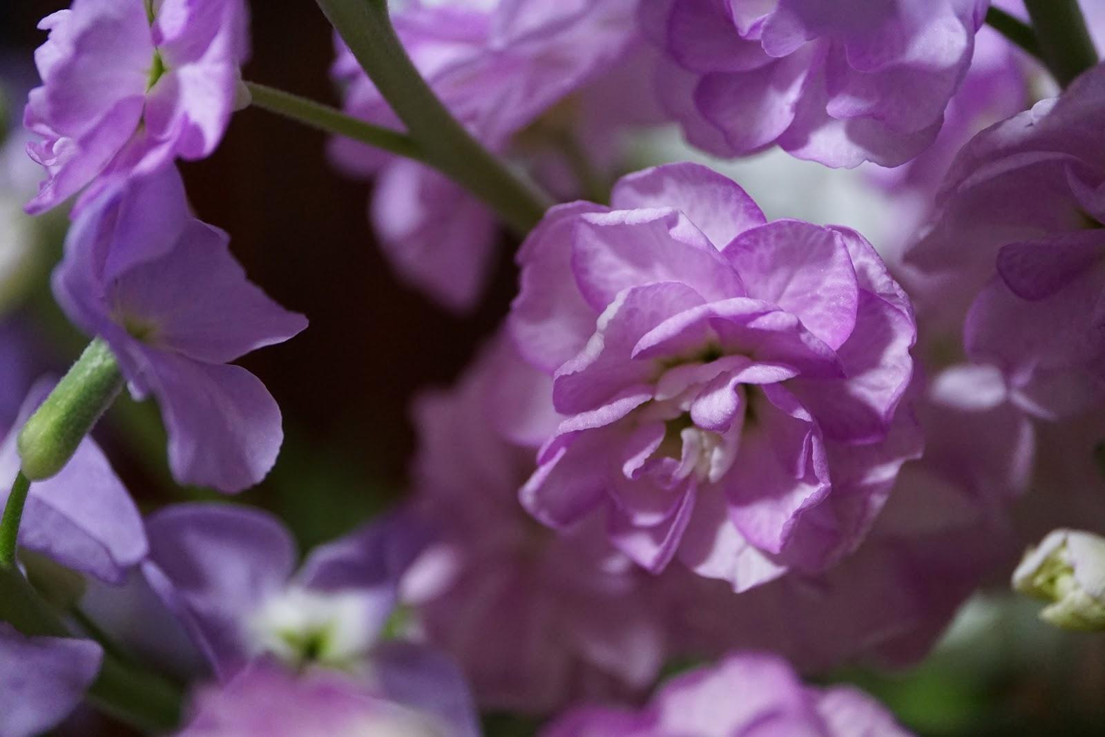 薄紫の小さめの幾つもの花瓶の花