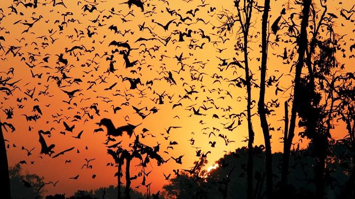 World's biggest mammal migration under threat